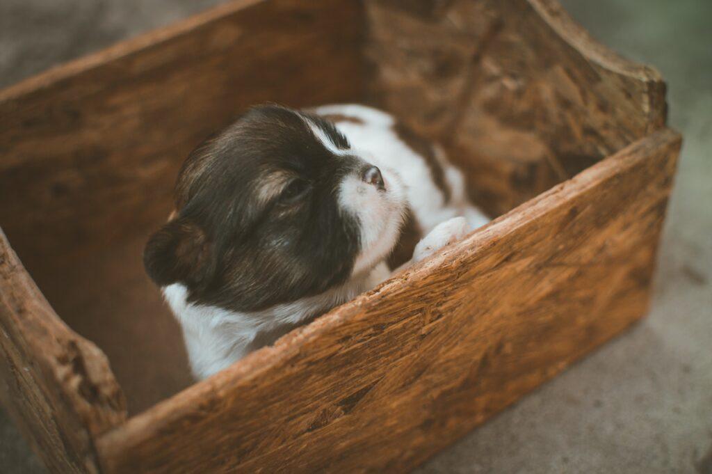 Перевозка животных из украины в россию